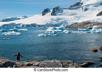 antártida, con, nieve cubrió, montañas, y, solo, pingüino de gentoo