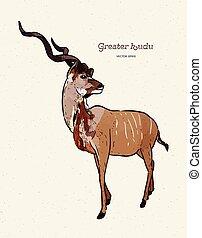 antílope, dibujado, kudu más grande, mano, vector, ...