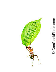 Ant and leave - Ant carrying a leaf.