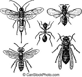 Ant and mosquitos - Ant and four mosquitos isolated on white...