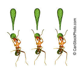ant and the symbols - The ant and the exclamation mark