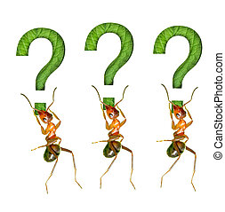 ant and the symbols - The ant and the question mark
