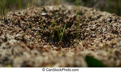ant ants insects on the earth movement works nature - ant...