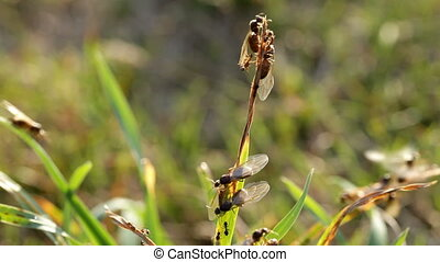 ant breeding - many flying ants crawling and flying in...