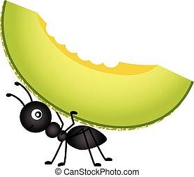 Ant carrying a cantaloupe melon