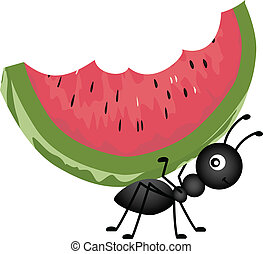Scalable vectorial image representing a ant carrying watermelon, isolated on white.