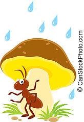 Ant - small brown ant sitting under a big mushroom in rain