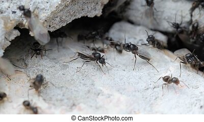 Ants crawling around a crack in the pavement