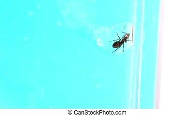 Ant crawls inside an edible gel, in glass tube on ant farm
