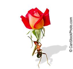Ant - Holding the flower of ants.