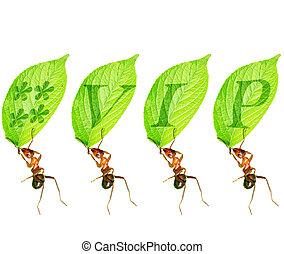 """Ant membership - Ant held the """" VIP """" member logo."""