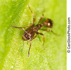 Ant on a green leaf. close