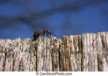Ant on the top of world