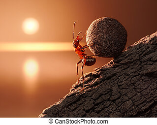 ant Sisyphus rolls stone uphill on mountain, concept