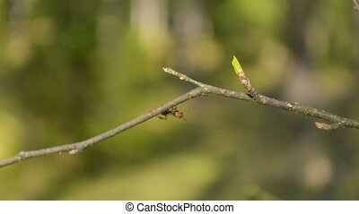 Ant sitting on the edge of the tree branch with people walking on the background