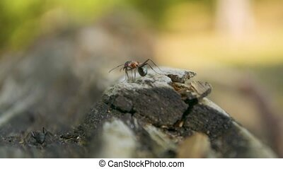 Ant sitting still on the edge of the old wooden log