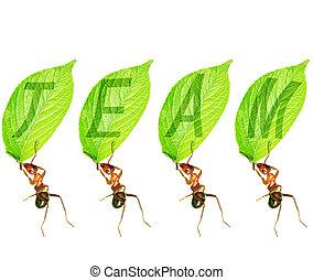 Ant team - Ant tell us team of infinite power.