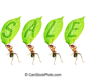 Ant to sell - The ants to promote creative picture
