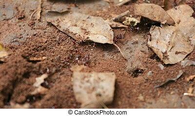 Ant Trail in Karura Forest, Kenya