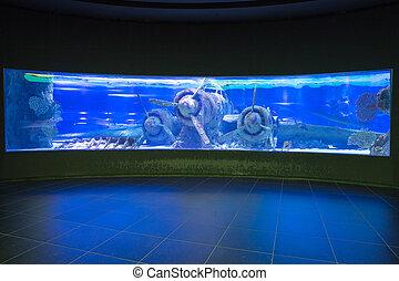Antalya aquarium of Turkey