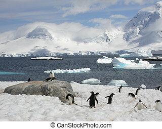 antarcti, pingüinos