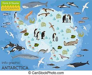 Antarctic, Antarctica, flora and fauna map, flat elements....