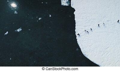 Antarctic gentoo penguin jump ocean top view