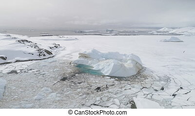 Antarctic gull fly over iceberg aerial top view - Antarctic...