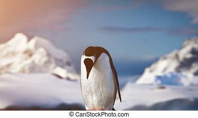 Antarctic Wildlife: lonley penguin standing on the rock -...