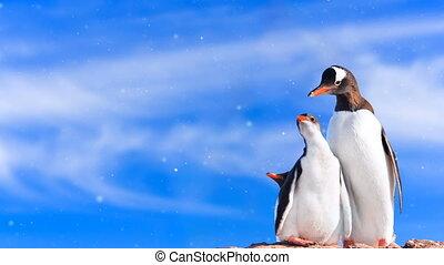 Antarctic Wildlife: penguin family