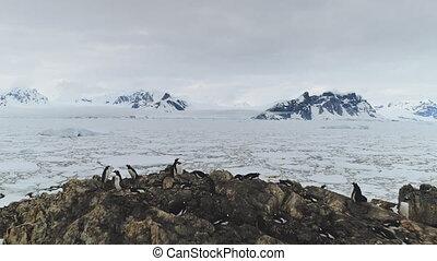 Antarctica aerial flight over ice ocean, penguins.