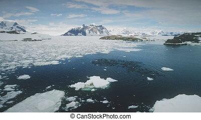 Antarctica aerial flight over swimming penguins. - Penguins...