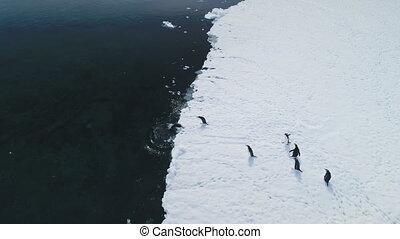 Antarctica gentoo penguin jump water aerial view