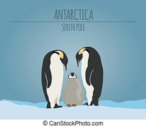 Antarctica (South Pole) graphic template. Vector...