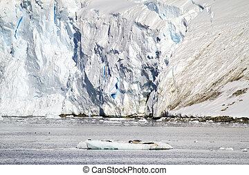 antarctique, naturel, habitat, cachets