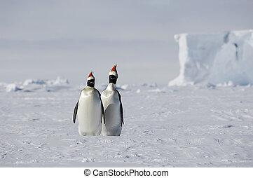 antarctique, noël