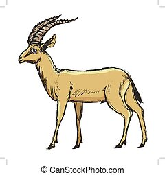antelope African animal - vector, coloured, sketch, hand...