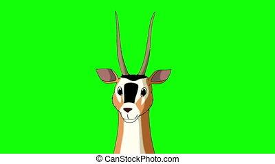 Antelope Gazelle Closeup Chroma - Wild antelope (gazelle)...