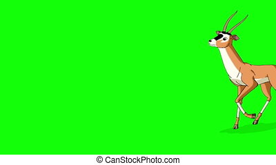 Antelope Gazelle Comes and Stops Chroma - Antelope or...