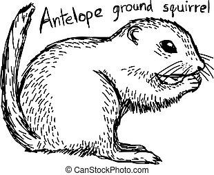 Antelope ground squirrel - vector illustration sketch hand...