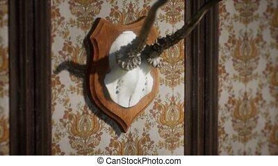 Antelope horns Vintage taxidermy real gazelle antlers