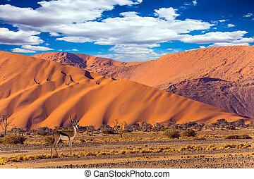 Antelope Impala standing at the desert dunes