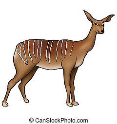 Antelope Kudu - Antelope 02 - High detailed and coloured...