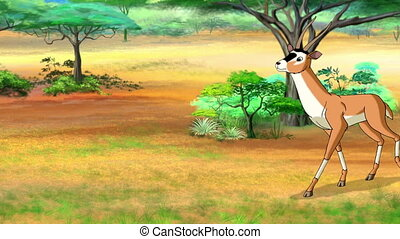 Antelope or Gazelle Comes and Stops - Antelope or Gazelle...
