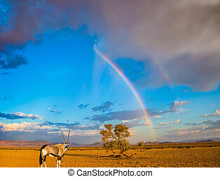 Antelope-oryx and magnificent rainbow