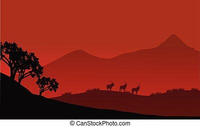 Antelope silhouette on the mountain