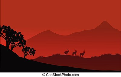 Antelope silhouette on the mountain