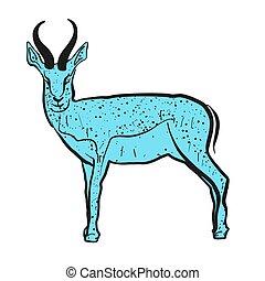 Antelope Springbok blue