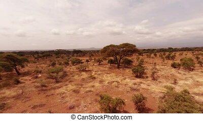 antenna vadászterület, közül, a, savannah.