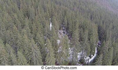 antenna vadászterület, közül, toboztermő fa, erdő